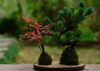 1盆栽.jpg